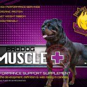 Prodog_MUSCLE+_V5-page-001